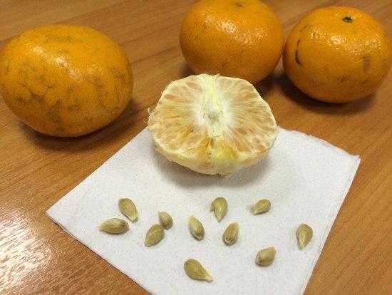 мандарин и косточки