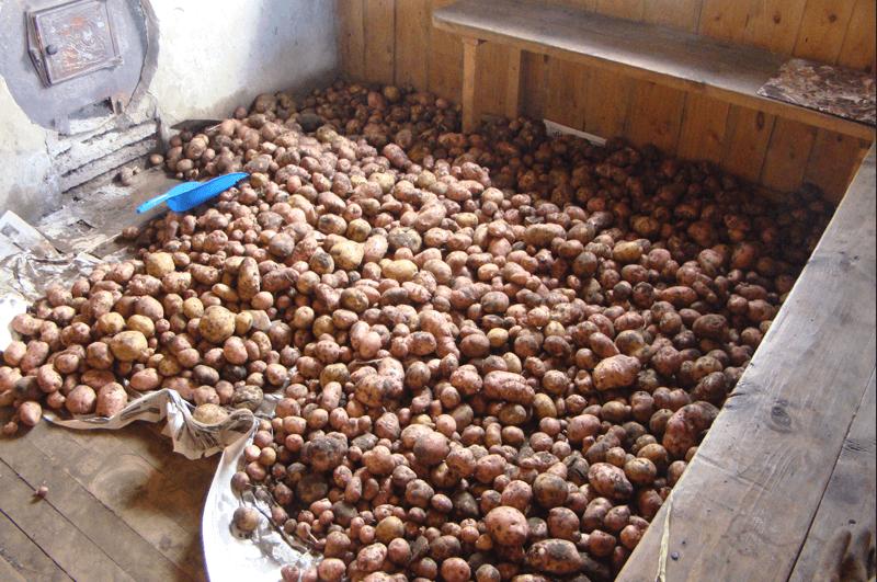 Можно ли хранить картошку