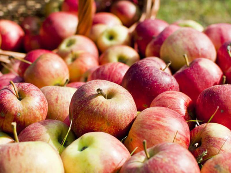 Яблоки красноплодные