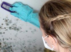 Сырость - благоприятная среда для роста грибков