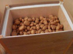 Чтобы картофель не утратил своих вкусовых качеств, его необходимо хранить правильно