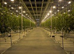 Благодаря освещению можно существенно улучшить эксплуатационные качества теплицы