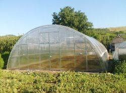 Круглогодичная теплица – это возможность выращивать экологически безопасные овощи, ягоды, зелень, цветы 12 месяцев в году
