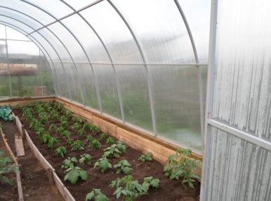 Правильно планируя пространство в теплице, можно добиться лучшего урожая