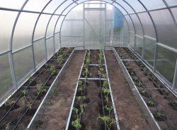 От грамотного и точного расположения и оформления грядок в теплице во многом зависит успех и правильность выращивания овощей