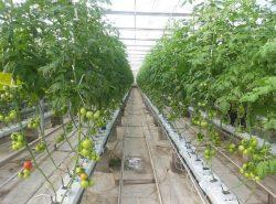 Чтобы получить богатый урожай, необходимо сначала обустроить надежную и качественную тепличную конструкцию