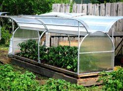 Выбирать парник или теплицу для дачи следует, исходя из вида и количества выращиваемых растений
