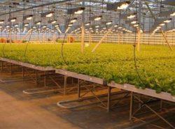 Используя умную теплицу, вам будет намного проще вырастить богатый урожай