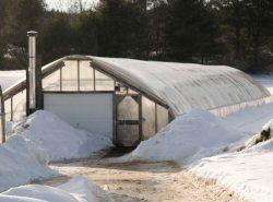 Что выращивать в теплице зимой должен решить для себя каждый огородник