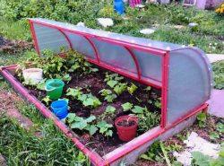 Парник для рассады – это удобное приспособления для каждого огородника