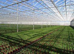 Тепличные хозяйства - выгодный бизнес на сегодняшний день