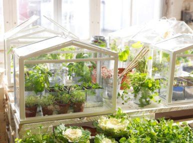 Домашняя теплица – это прекрасный способ выращивать растения у себя дома
