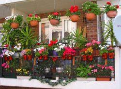 С приходом теплого сезона каменные джунгли мегаполисов наполняются яркими красками, включая восхитительные цветы на балконе