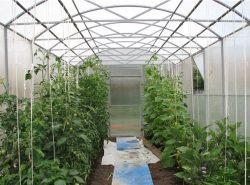 На небольшом участке мы сажаем в теплицу огурцы и помидоры