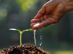 Практически каждый вид растений требует свой режим полива