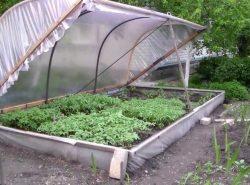 Часто соорудить парник на своем садовом участке можно из подручных материалов