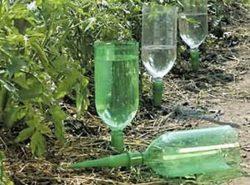 Можно попробовать соорудить капельный полив теплицы при помощи пластиковых бутылок своими руками