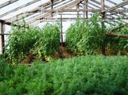 Даже небольшой парник отлично подойдет для выращивания разнообразной зелени