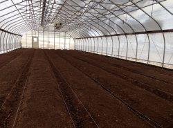 Чтобы вырастить хороший урожай, следует обрабатывать теплицу